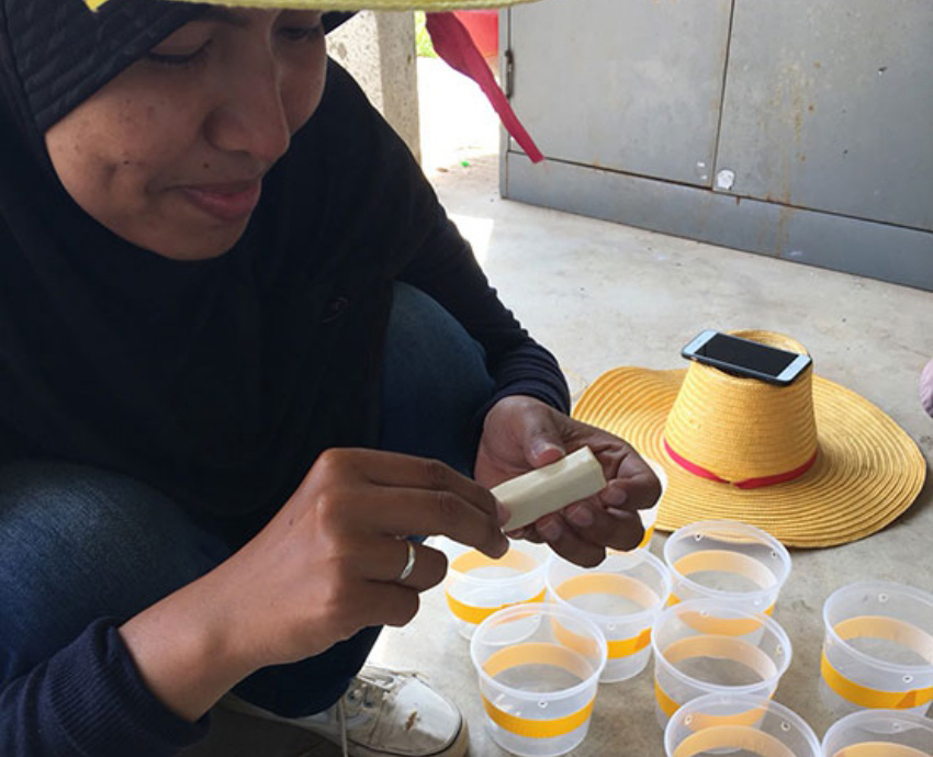 PSU Researchers invent Para Rubber Foam for Insects Trap to reduce costs for Thai Farmers